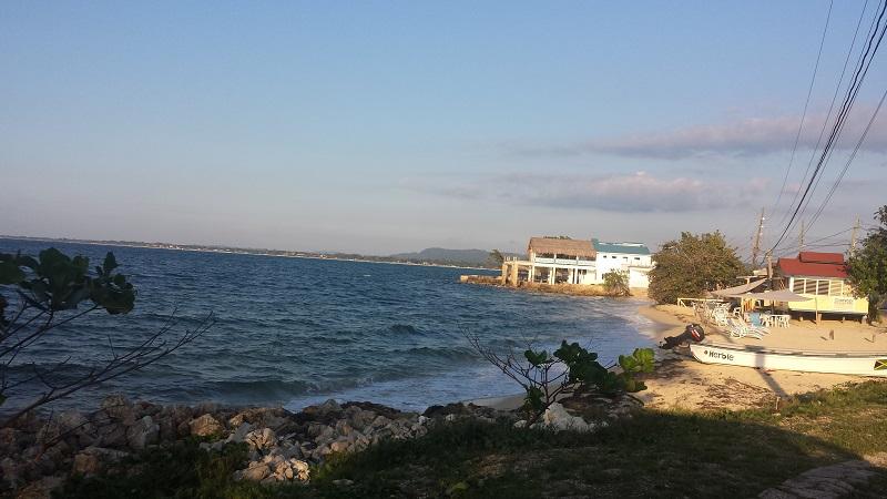 Jamaica Beach- Avocette