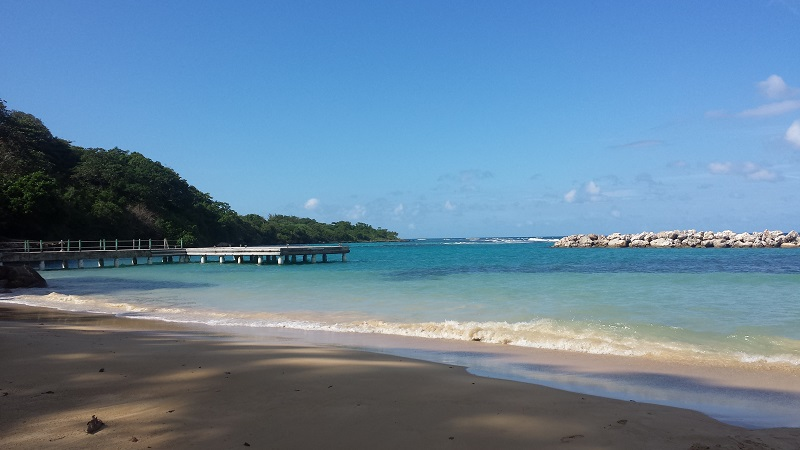 Jamaica Beach-Avocette